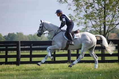 gray eventing horse warming up